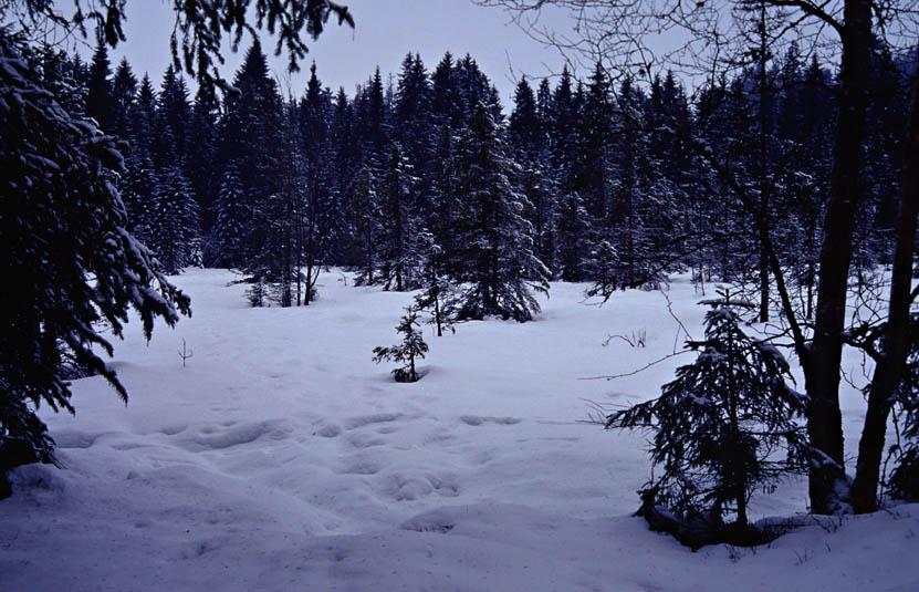 Winter ist's geworden 1