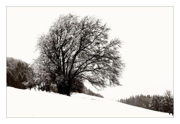 Winter IV