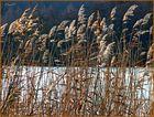 Winter kann so schön sein - Am Teich