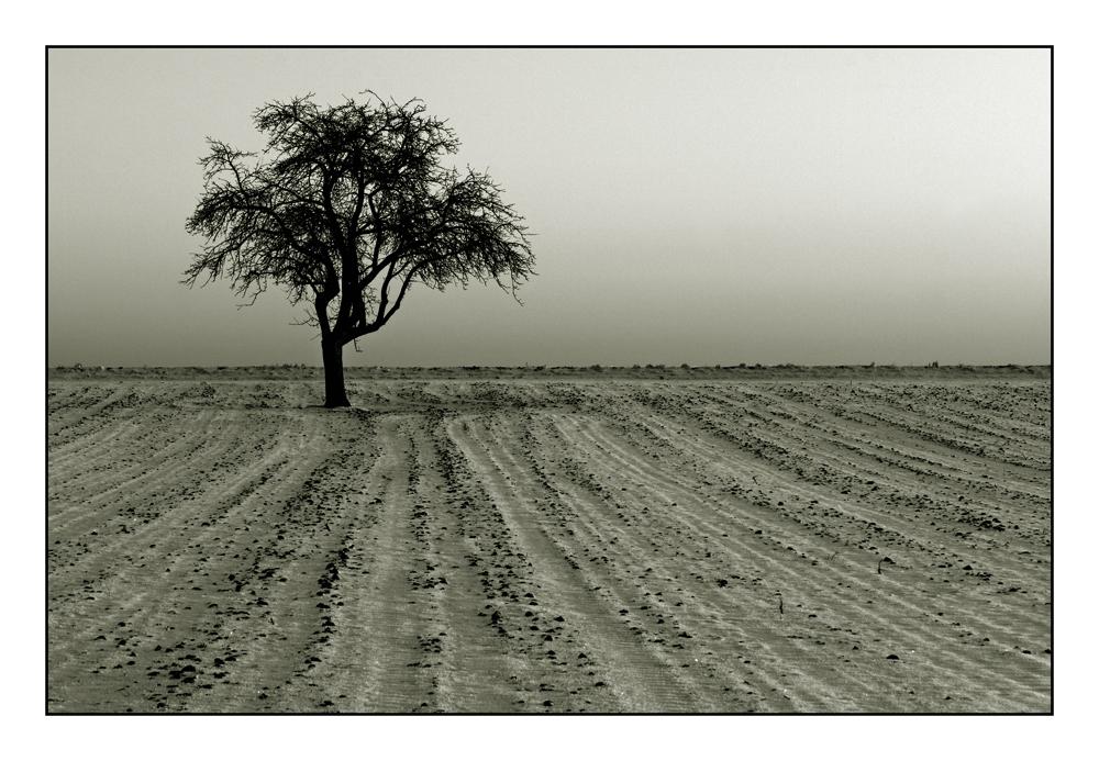 Winter-Landschaft (2)