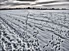 winter-landschafts-bild ...