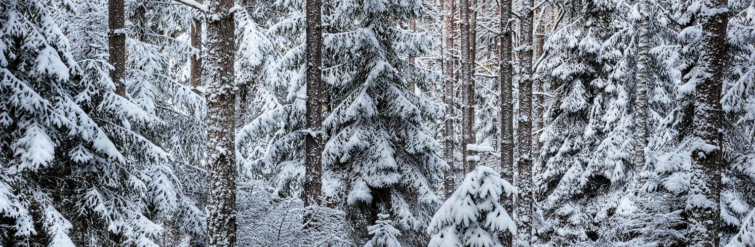 Winter-Märchenwald