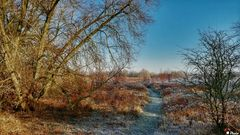 Winter Millingerwaard