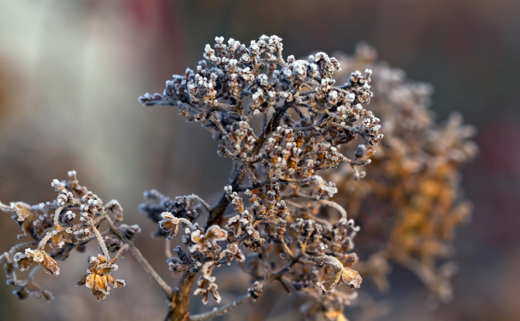 Winter Mittwochsblümchen