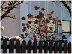 Winter-Mittwochsblümchen