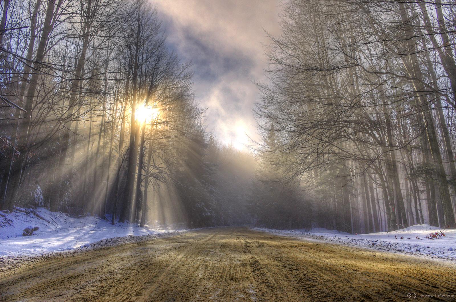 Winter Nebel
