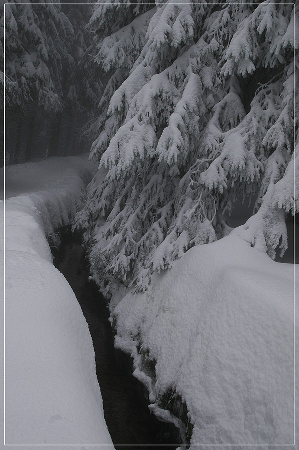 Winter-Nebel-Wald