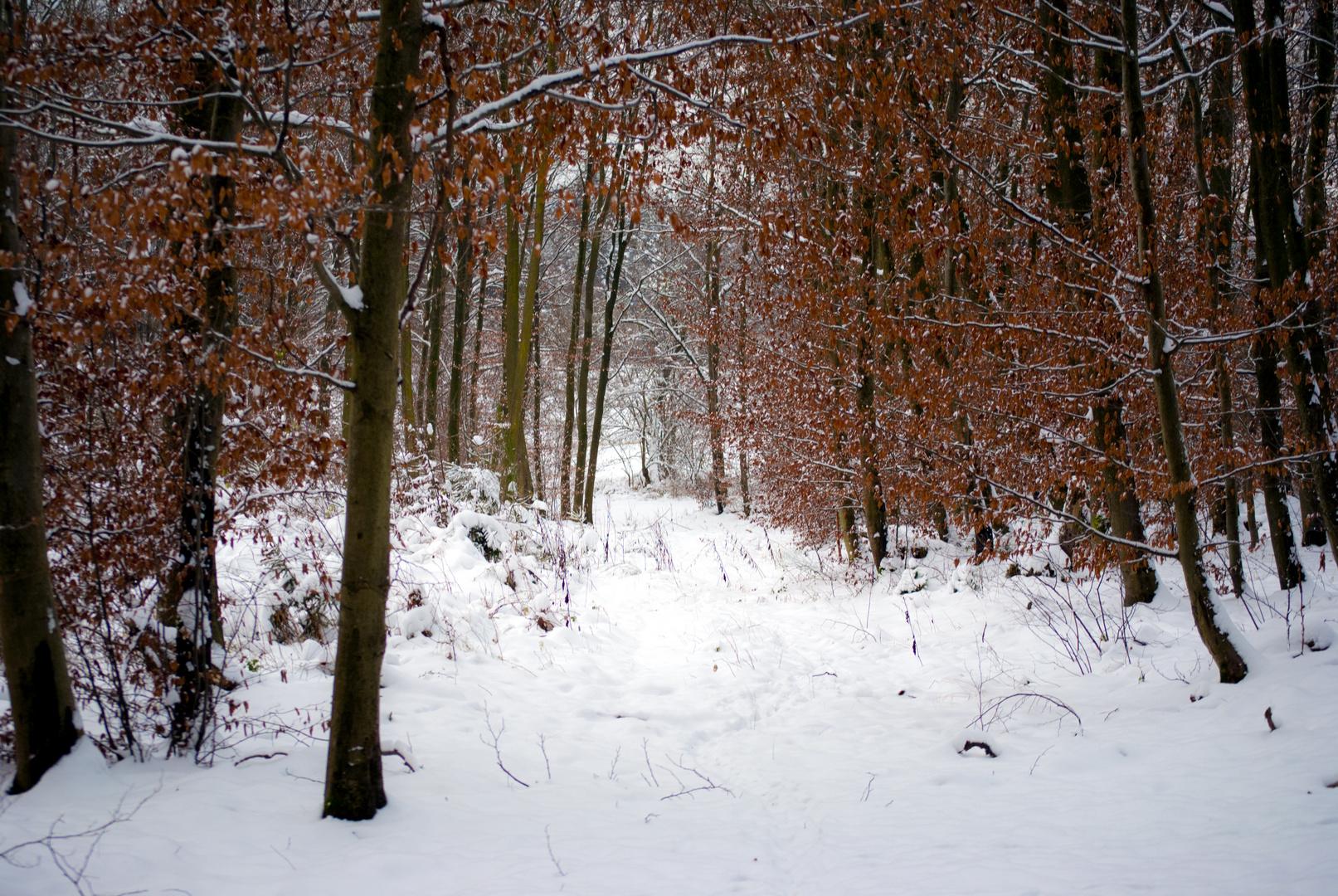 Winter oder Herbst?!