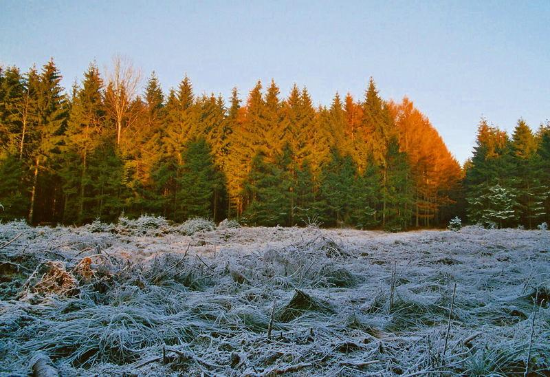 Winter ohne Sonne