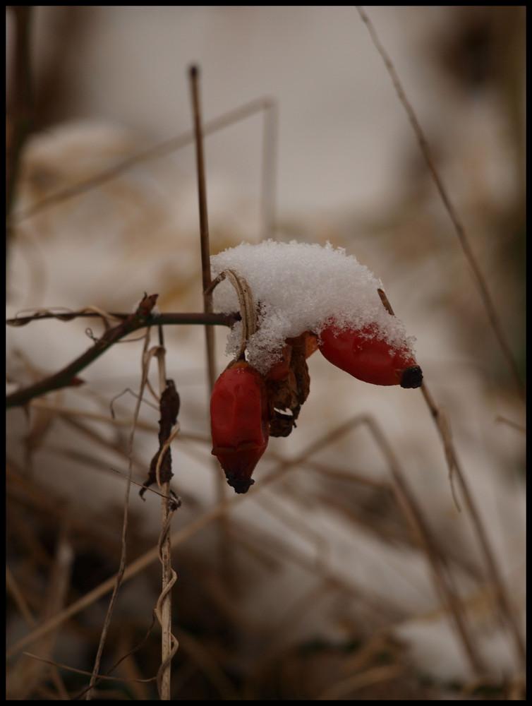 winter portrait III