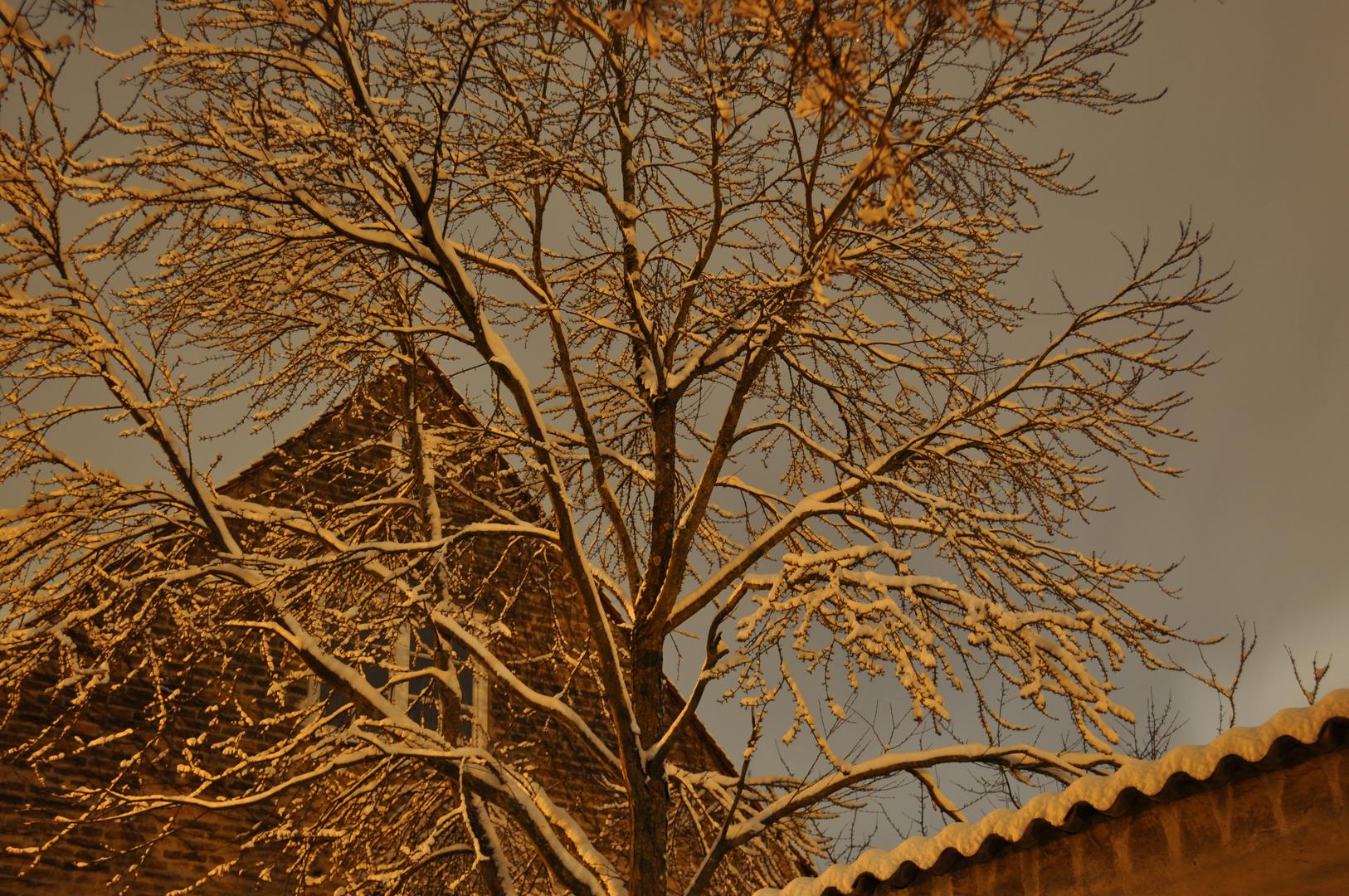 Winter postcard