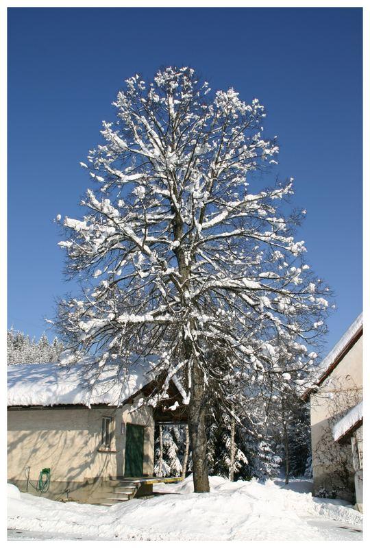 Winter pur
