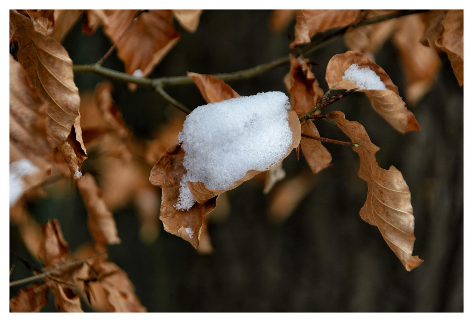 ~ Winter Reste ~