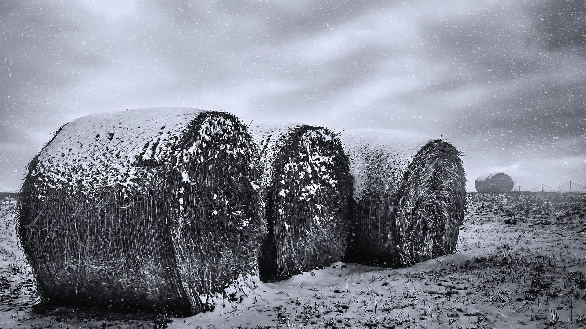 Winter-Rolle