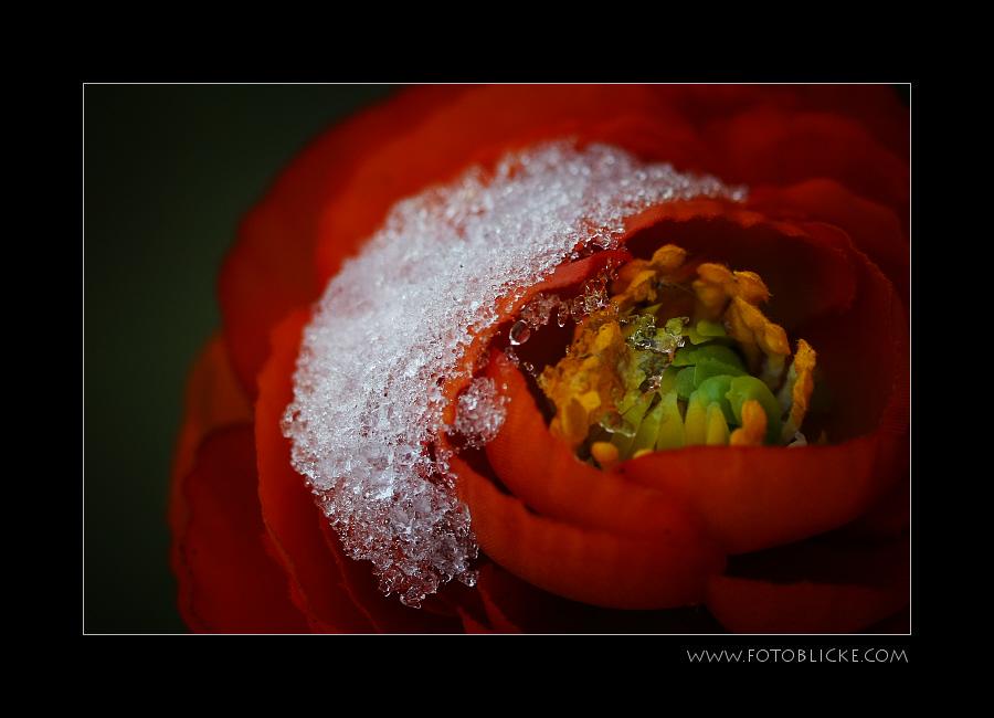Winter Rot