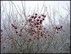 Winter rot-weiß