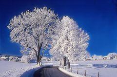 Winter .Sachsenried