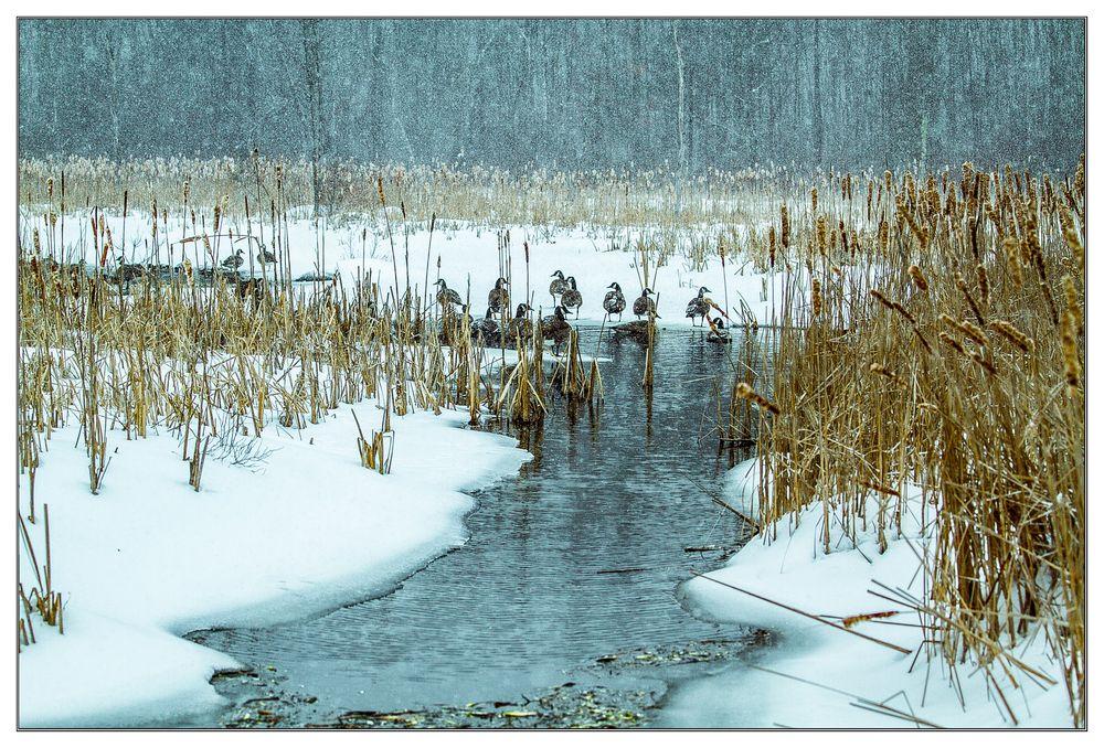 Winter Scene on the Pond