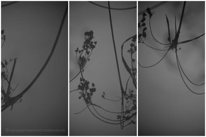 Winter Seeds 04