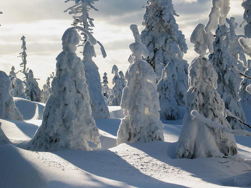 Winter-Sehnsucht