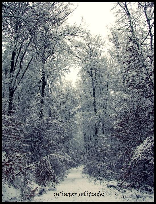 :winter solitude: