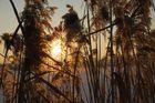 Winter Sonnenuntergang