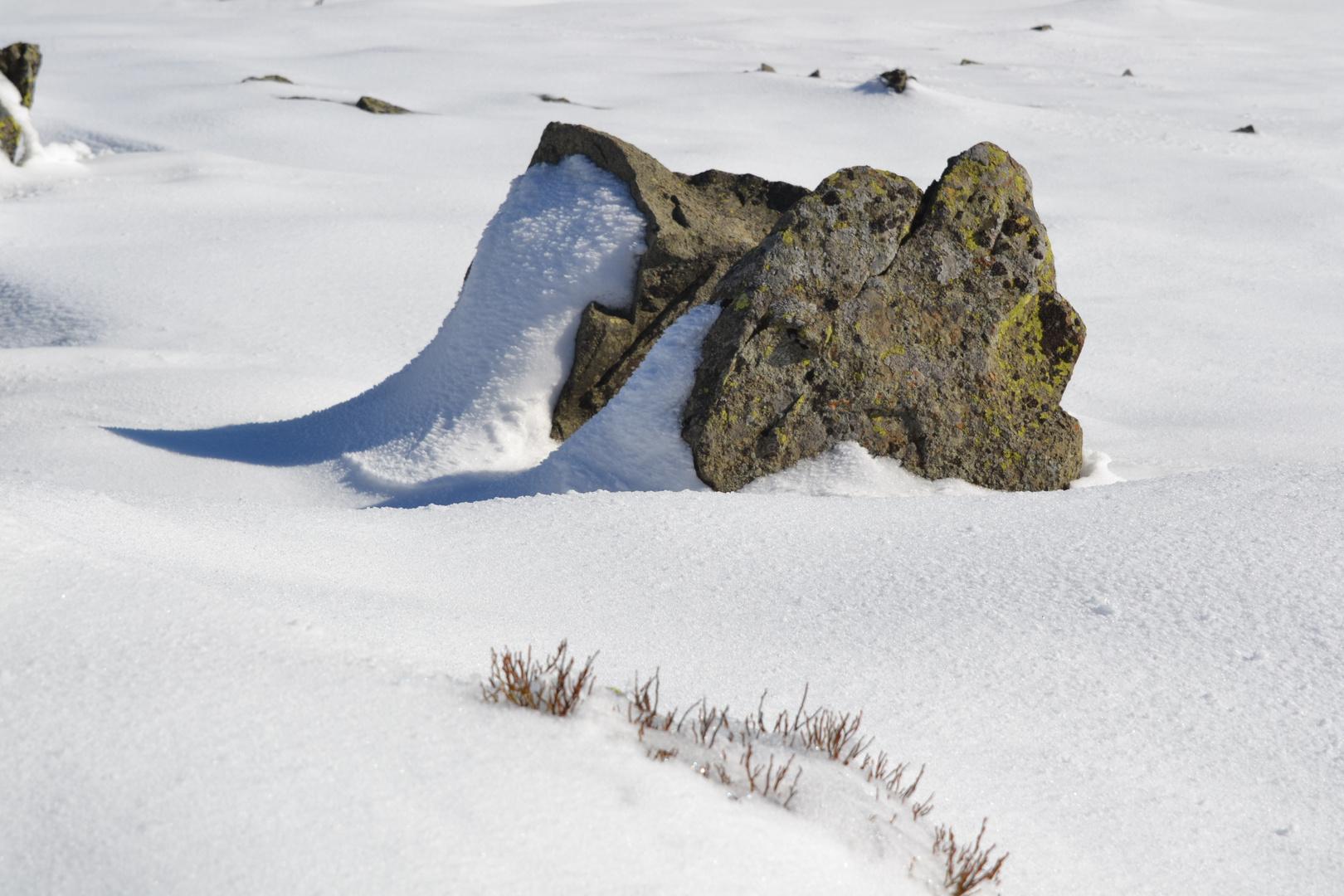 Winter Stein
