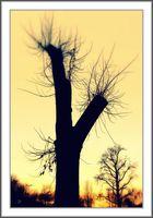 *** Winter Sunset ***