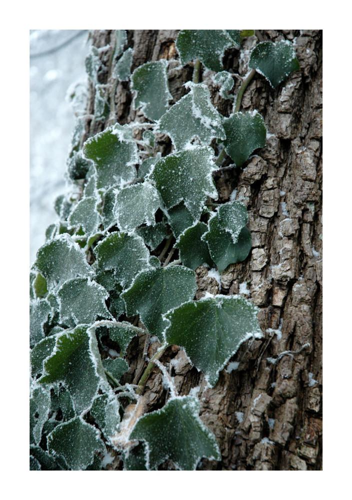 Winter Symbiose