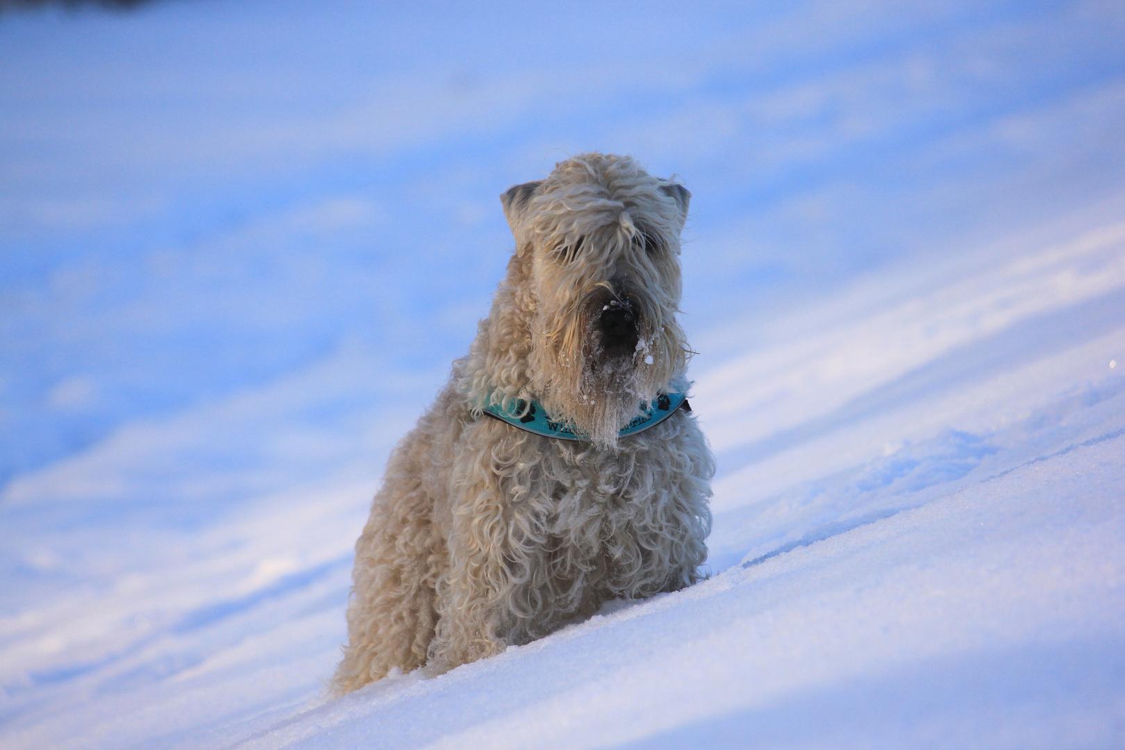 Winter - Terrier ;-)