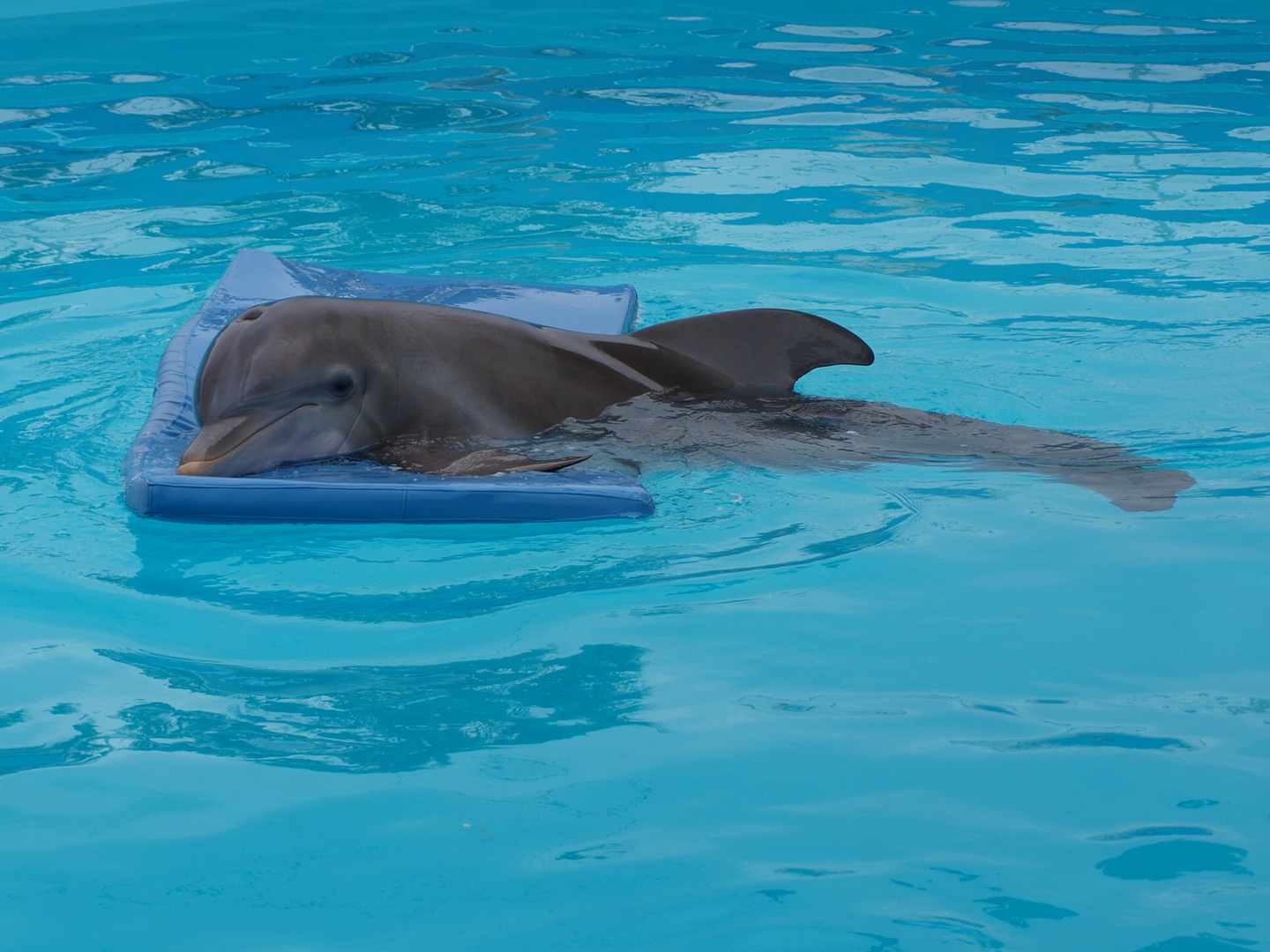 Winter- The Dolphin that could!