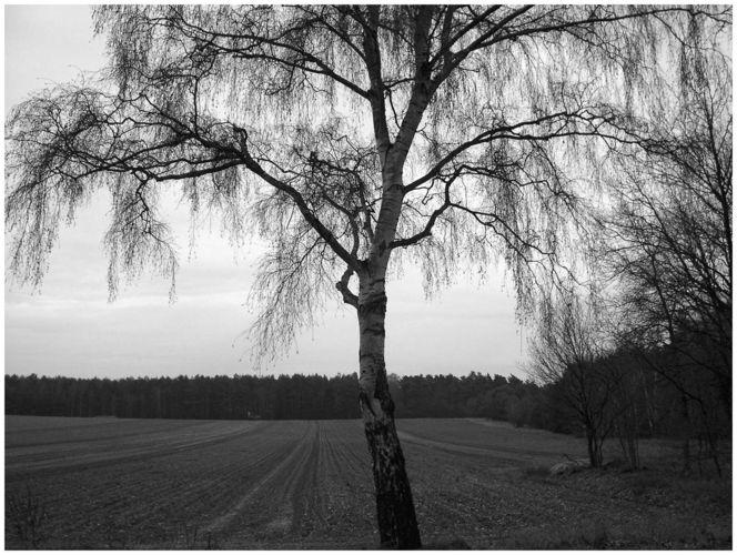 winter tree..