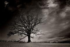[Winter Tree]
