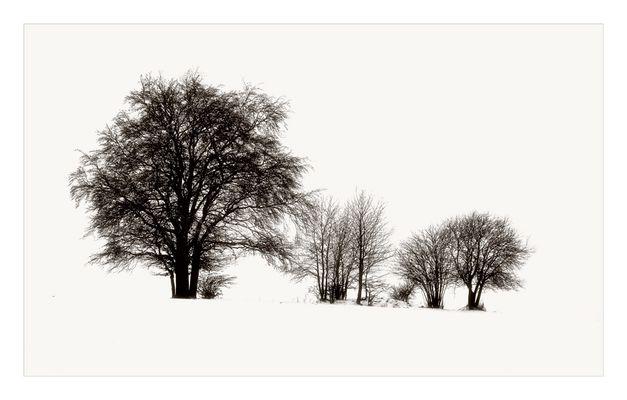 Winter V