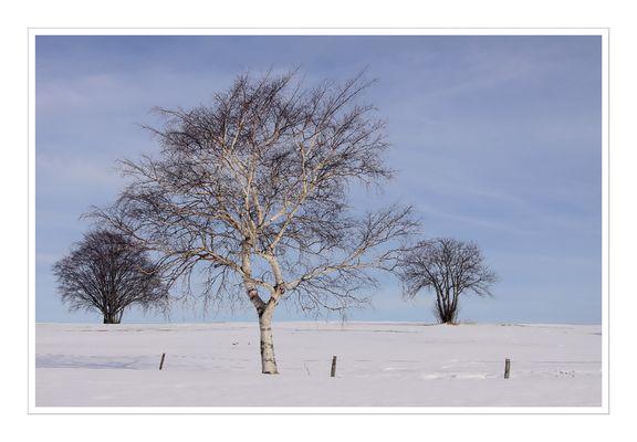Winter VIII