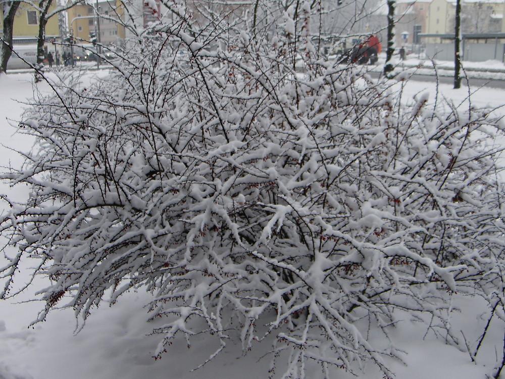 Winter vor der Türe