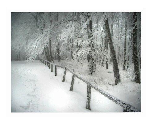 winter | wald | 2 -