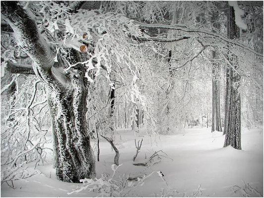 winter | wald | 3 -