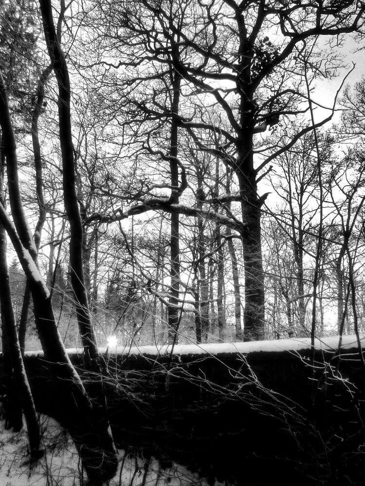 Winter Walk 2b