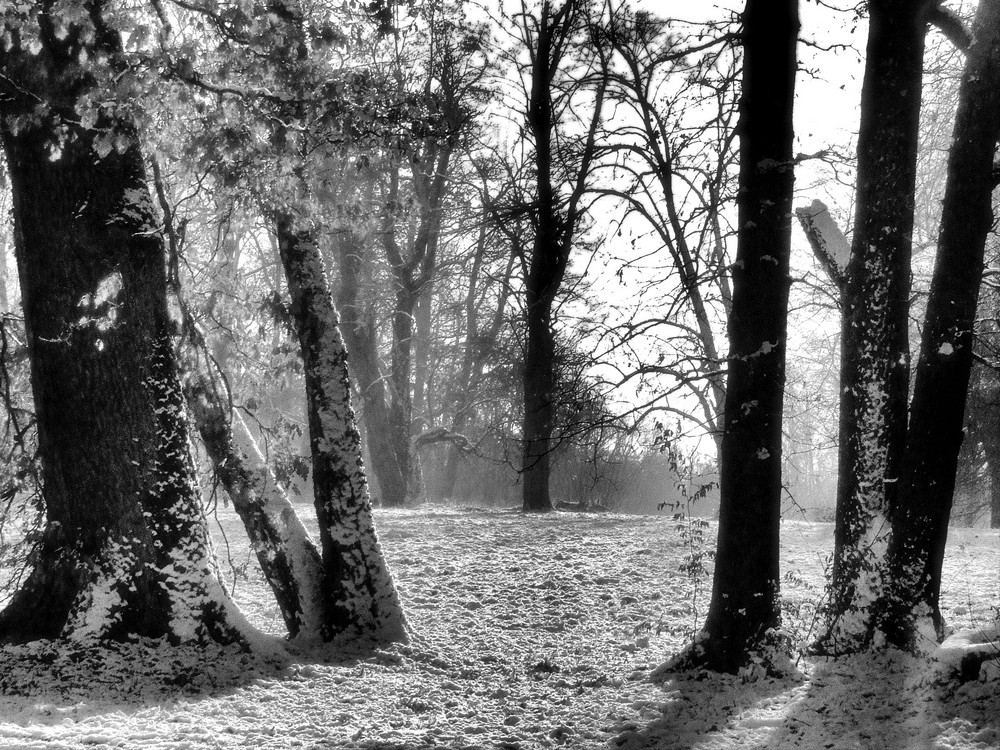 Winter Walk 4a