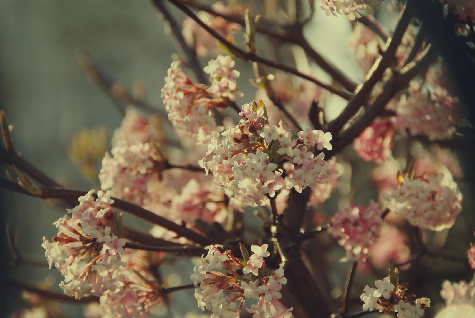 Winter weicht dem Frühling