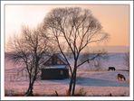 Winter Weide 2
