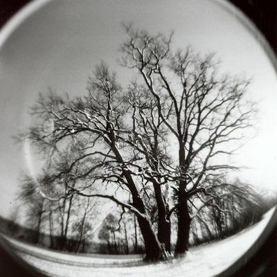 winter with holga