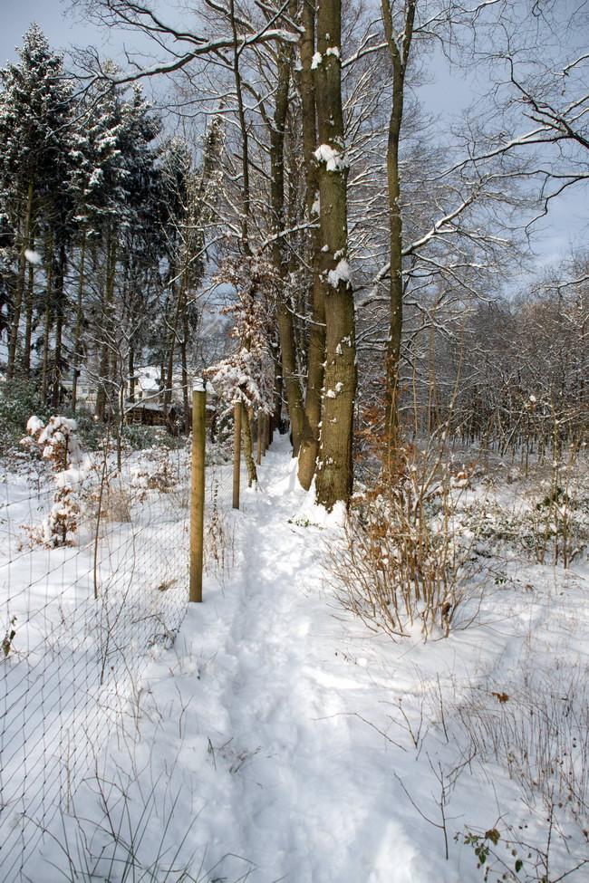 Winter Wonderland - 3