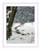Winter Wonderland (3)