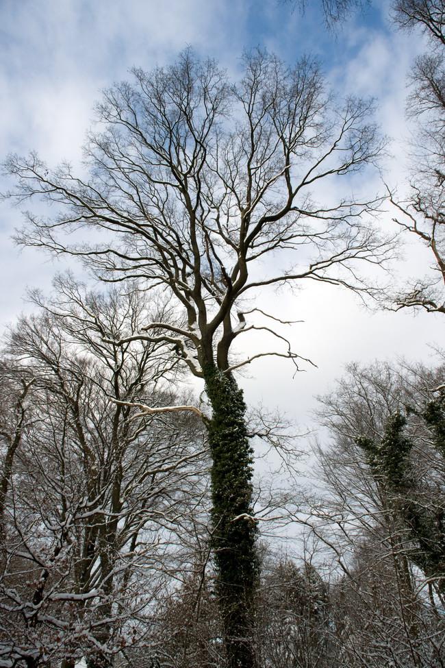 Winter Wonderland - 5