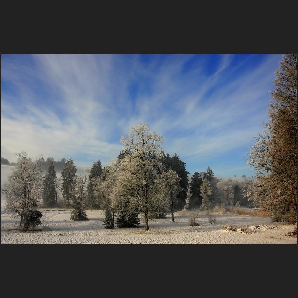 [ winter wonderland ]