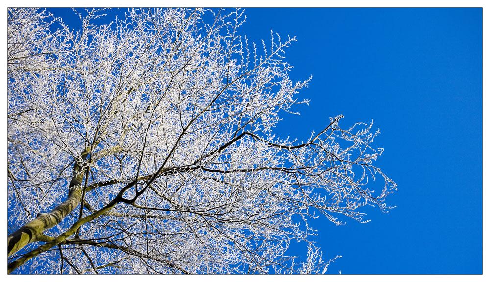 Winter Wonderland lll