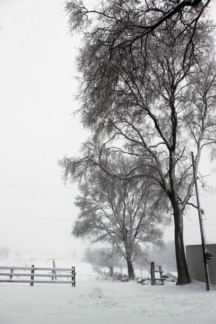 Winter Wonderland Michigan
