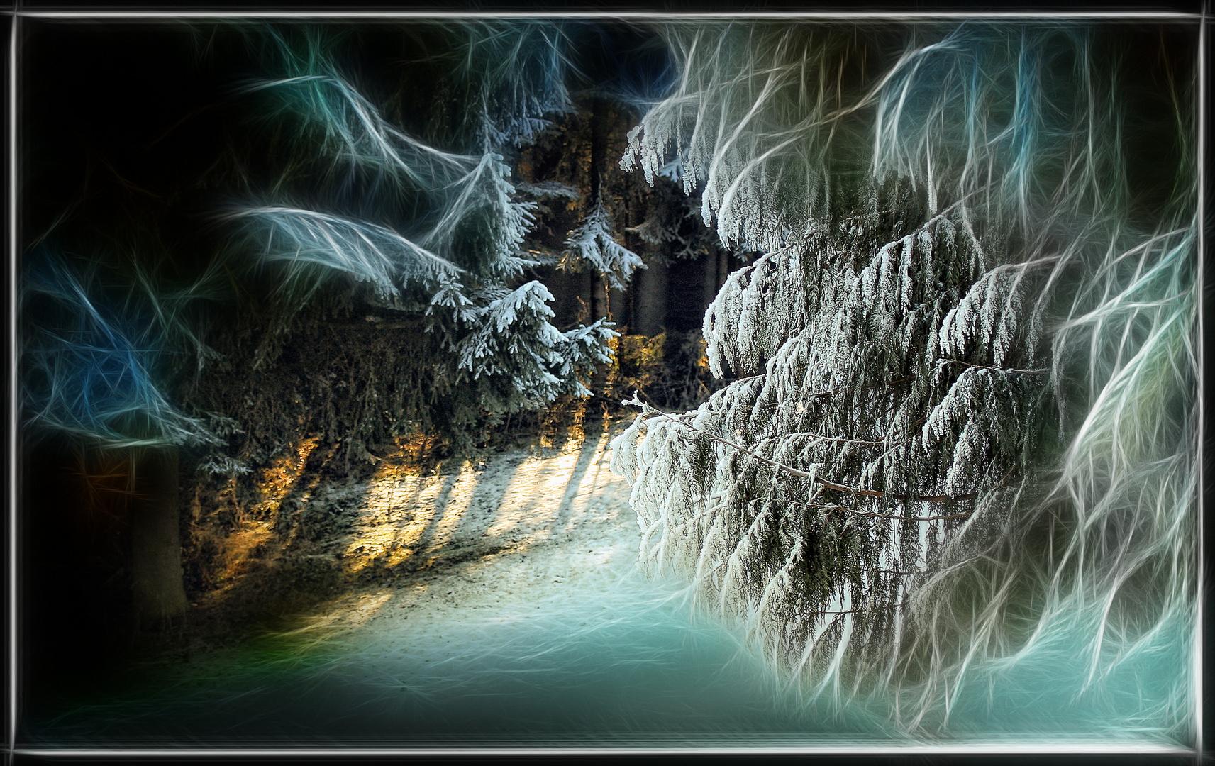 Winter- Wunder- Wald